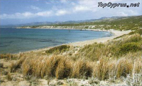 Песчаный пляж Лара Бей, где морские черепахи откладывают яйца